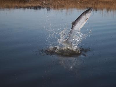 Angelruten für Raubfische