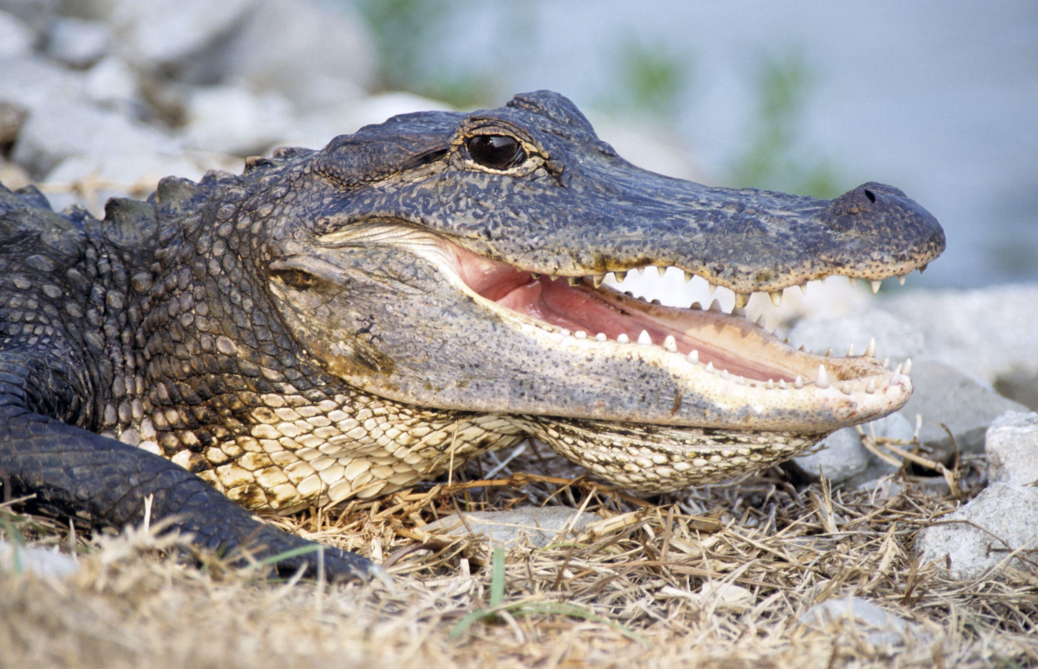 Aktivurlaub in den Everglades
