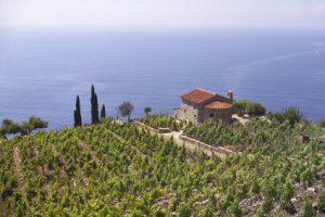 Weinberg mit Kapelle bei Campo la Feno, im Westen der Insel