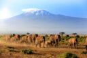 Abenteuer in Tansania: den Kilimandscharo besteigen