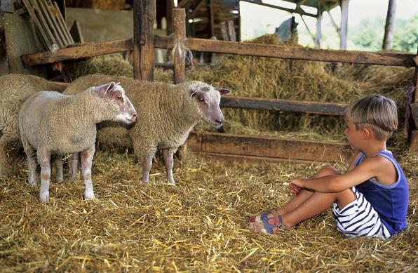 Urlaub auf dem Bauernhof –  Ein Erlebnis für die ganze Familie
