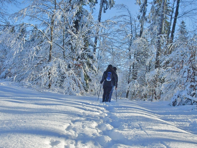 Ganz nach Lust und Laune wandert man zum Beispiel auf dem Harzer-Hexen-Stieg. Foto: djd/Touristinformation Osterode am Harz